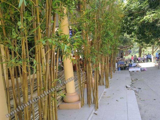 Thiết kế , thi công tre trúc khu du lịch Phong Nha - Kẻ Bàng tỉnh Quảng Bình