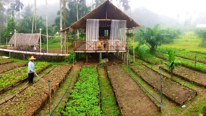 Ngôi nhà mái lá giữa vườn rau này đang được cư dân mạng Việt share điên đảo